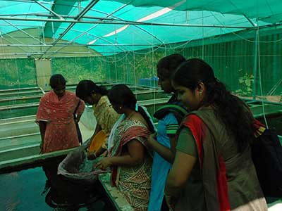 Snap shot of an ornamantal fish practical session of a training at KVK